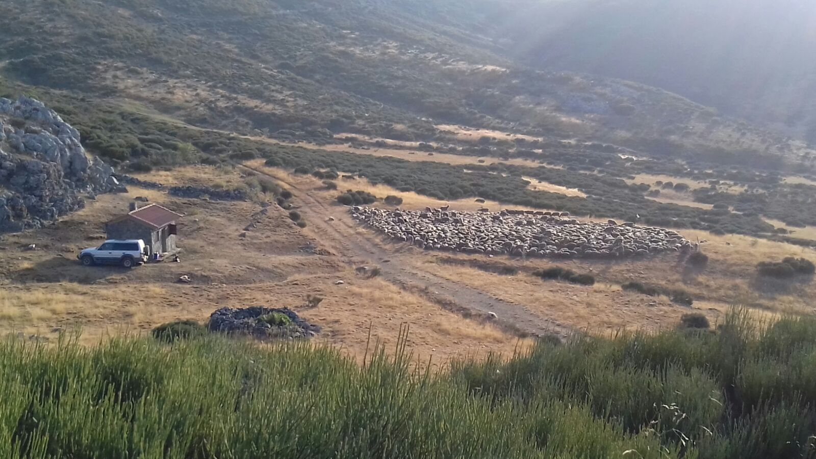 Las ovejas y el redileo o majadeo