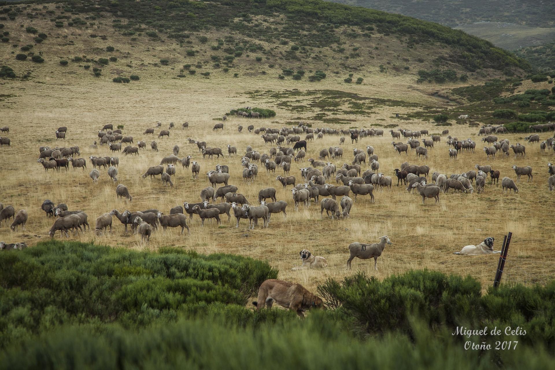 Homenaje a los pastores de la trashumancia
