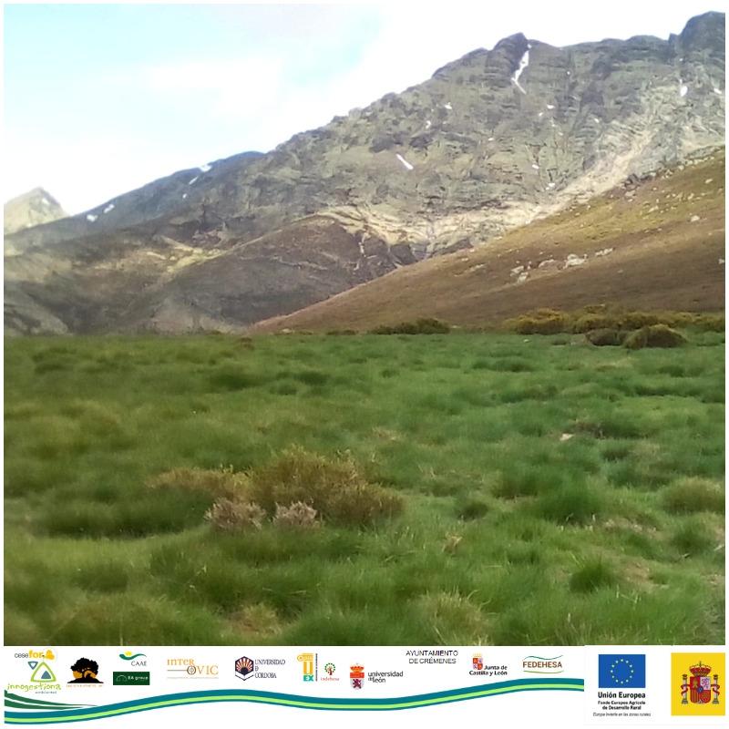 Grupo Operativo OVINNOVA. Partners of Fundación Monte Mediterráneo visit the mountain meadows