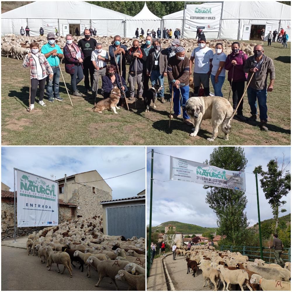 Fundación Monte Mediterráneo en Naturcyl con un rebaño trashumante