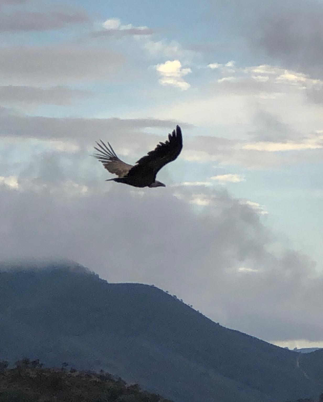 Vistas desde y a El Cuervo