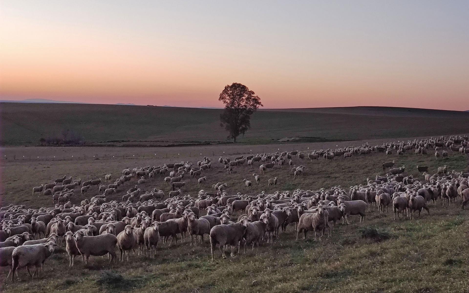 Die Treffen mit Schafhaltern aus Extremadura und Andalusien gehen weiter, um deren Beteiliguyng an der Transhumanz 2021 zu organisieren