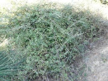 Planta_3aw
