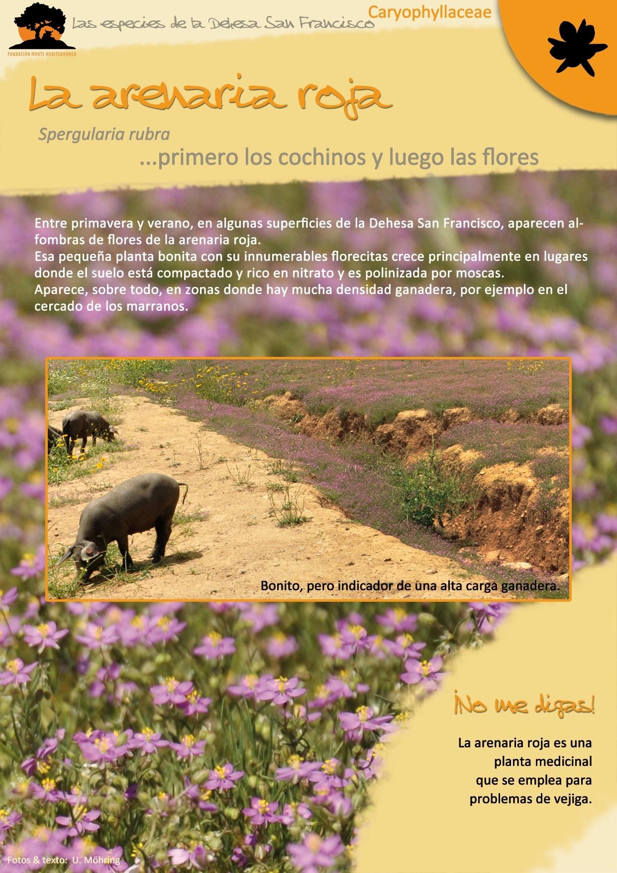 La Arenaria Roja