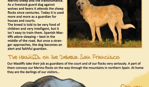 The Spanish Mastiff