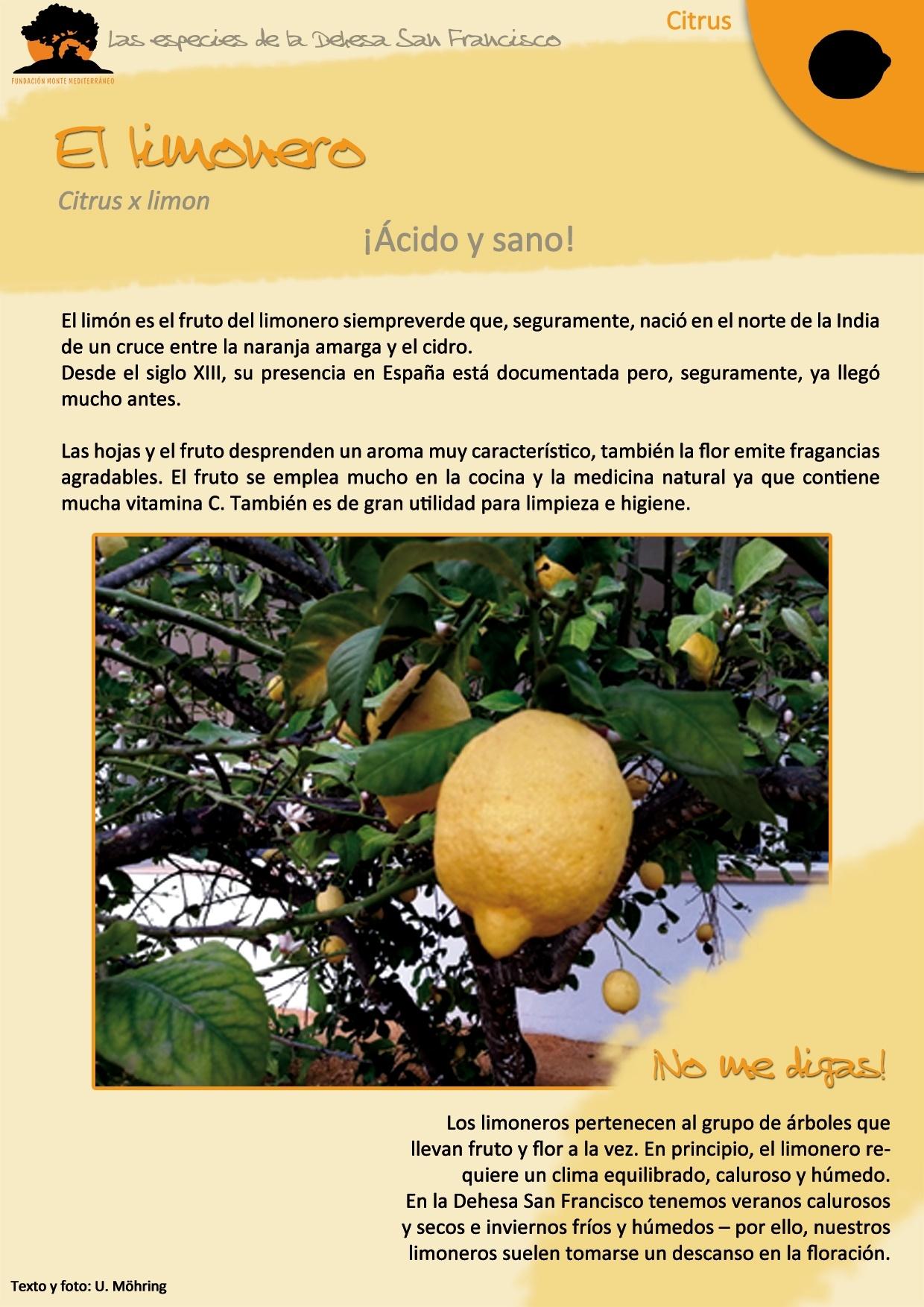 El limonero